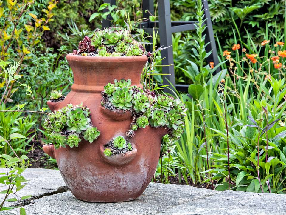 Strawberry pot planted with stedum in a garden