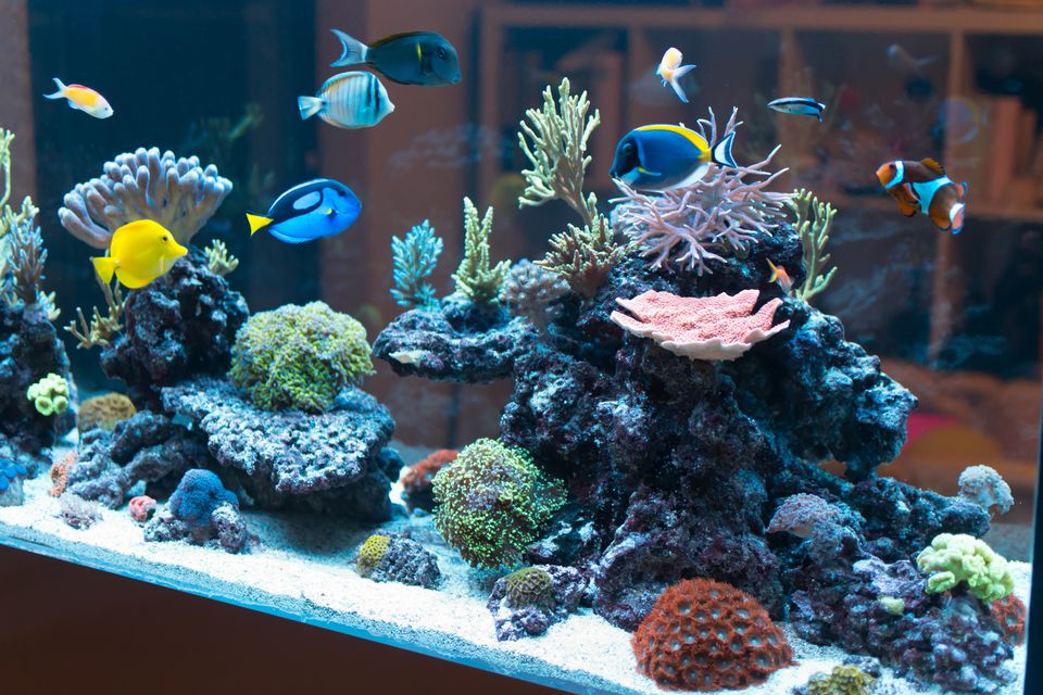 Reef aquarium