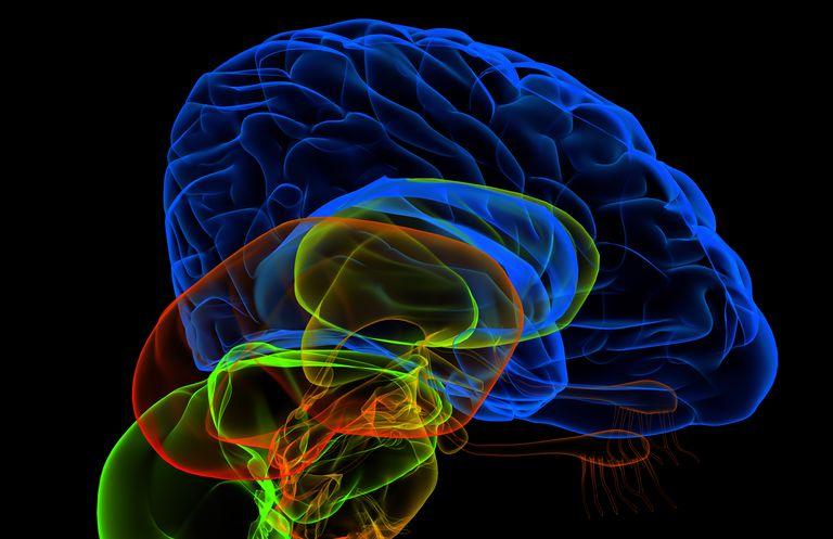 Illustrations of a human brain