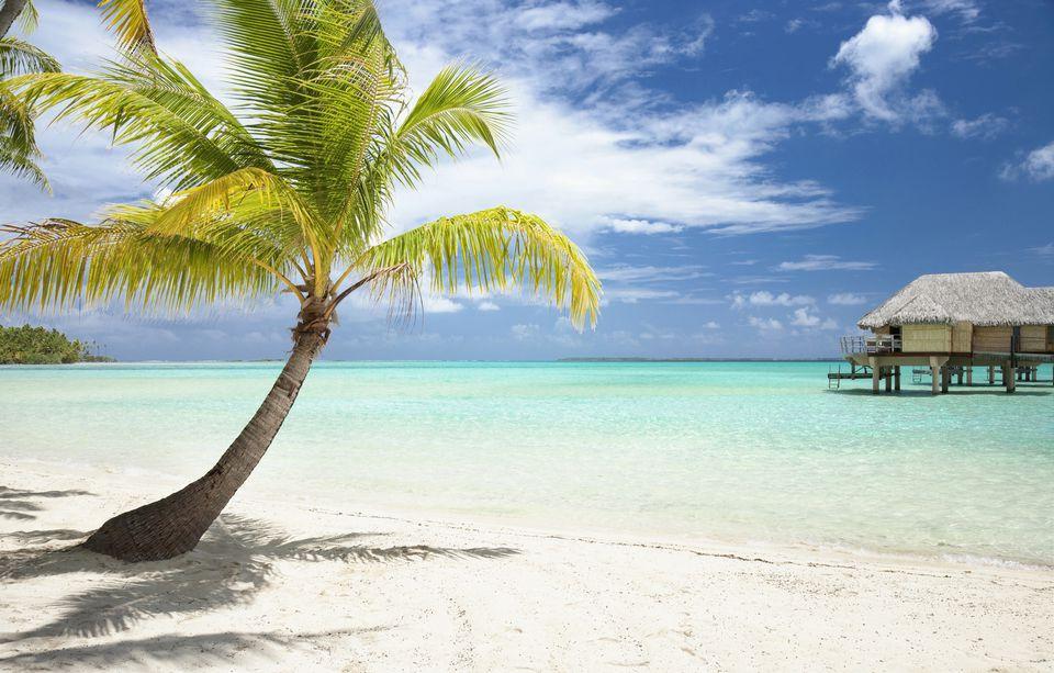 Image: Palm tree on tropical beach.