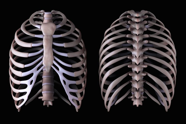 Thoracic spine and rib cage in 2 views.
