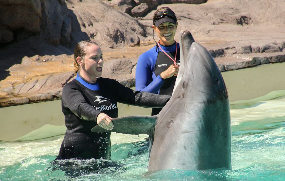 Dolphin Interaction at Sea World San Diego