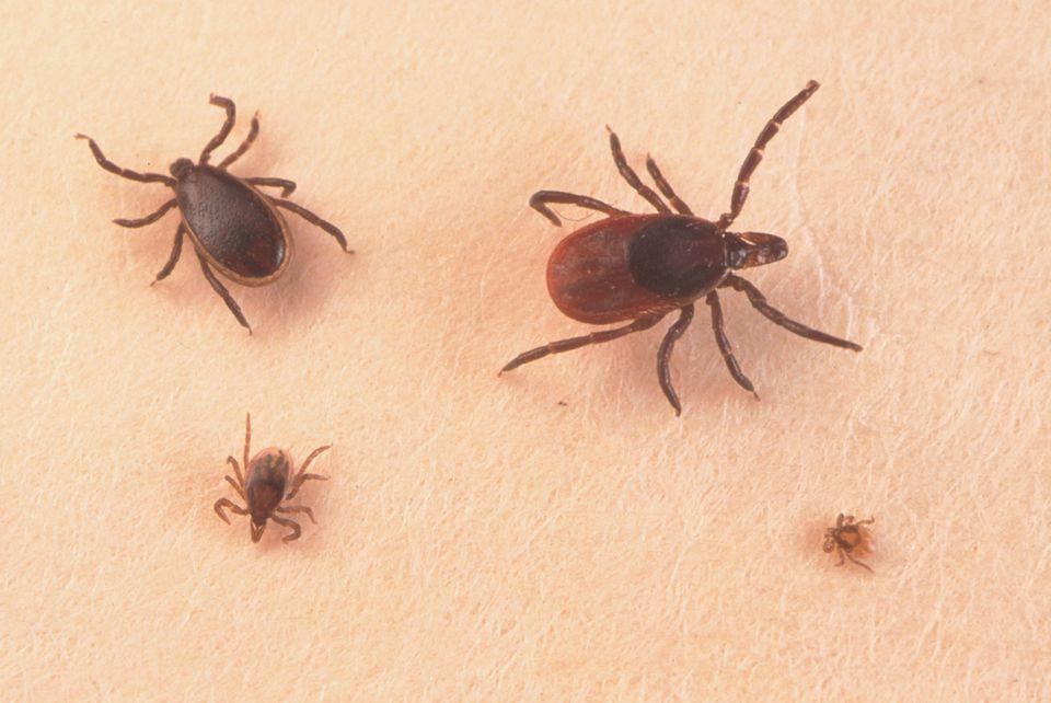 tröpfchen von parasiten auf menschen befallen.jpg