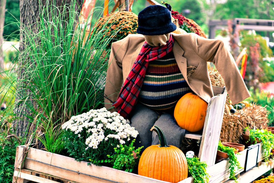 fall scene with scarecrow