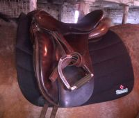 EquineLux Dressage Pad