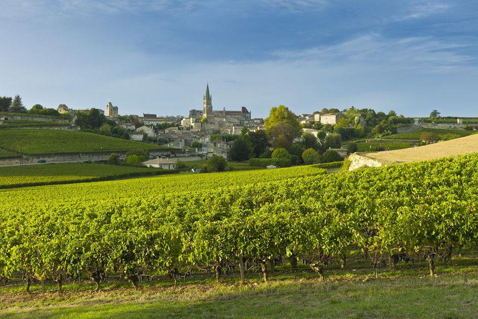 Vineyards in St Emilion, Bordeaux, France