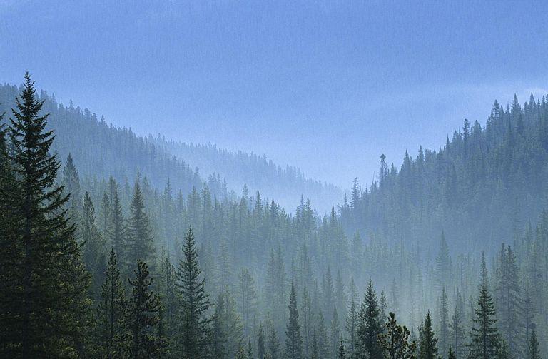 Boreal Forest (Taiga)