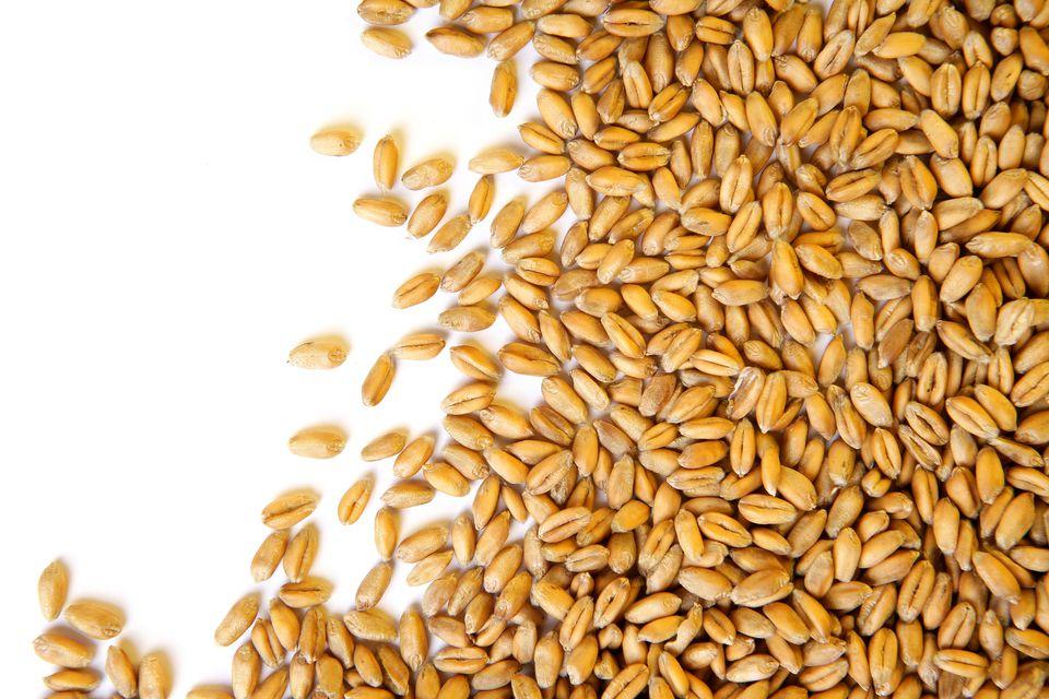 Wheat grains on white