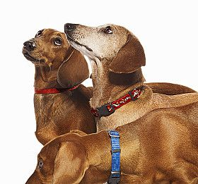 Tres perros dachshund.