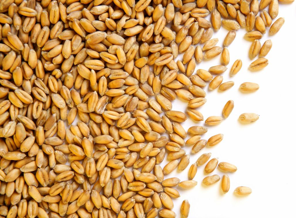 What Are Wheat Berries And Can I Do With Them