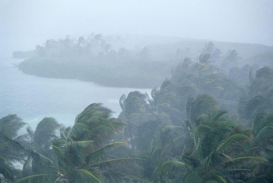 Coconut palm trees (Cocos nucifera) during storm, Contoy Island National Park, near Cancun, Caribbean Sea, Mexico, January