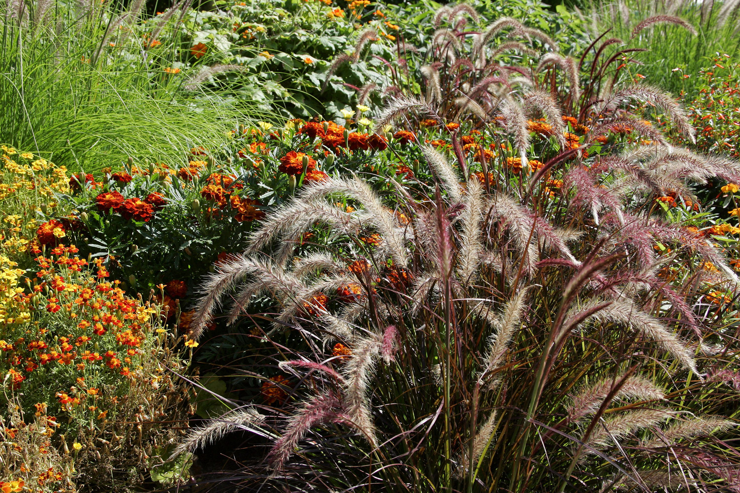 Ornamental grasses care and maintenance for Wild ornamental grasses