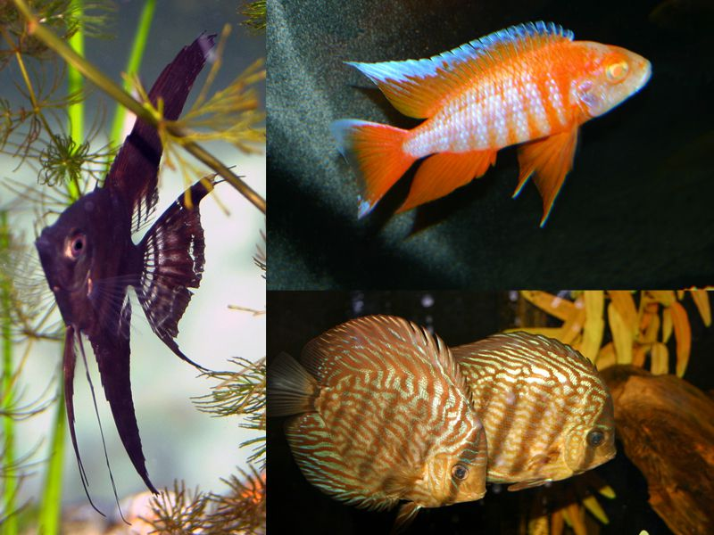 Unusual Fish For Special Aquariums