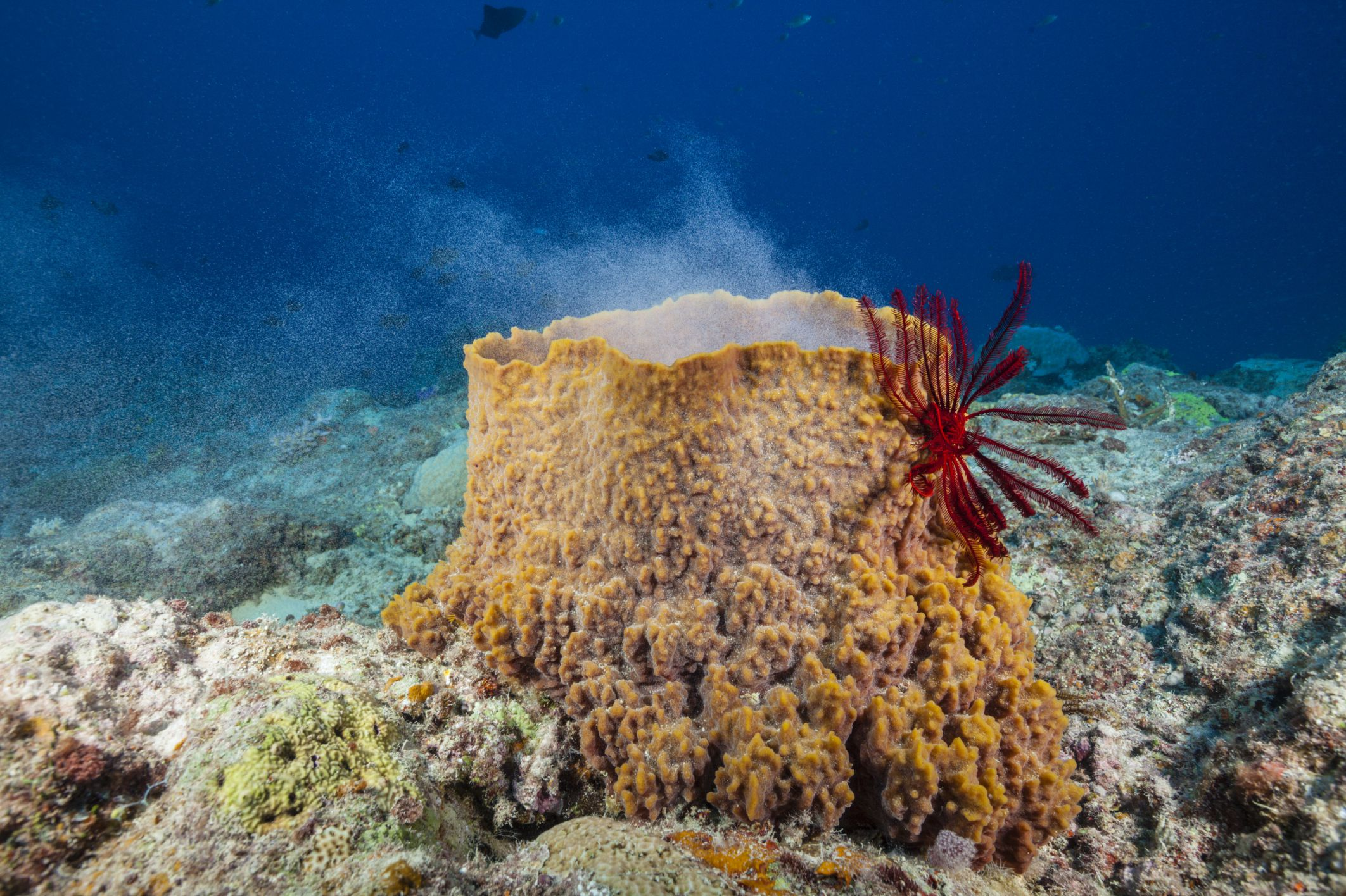 Sea Sponge Facts And Examples