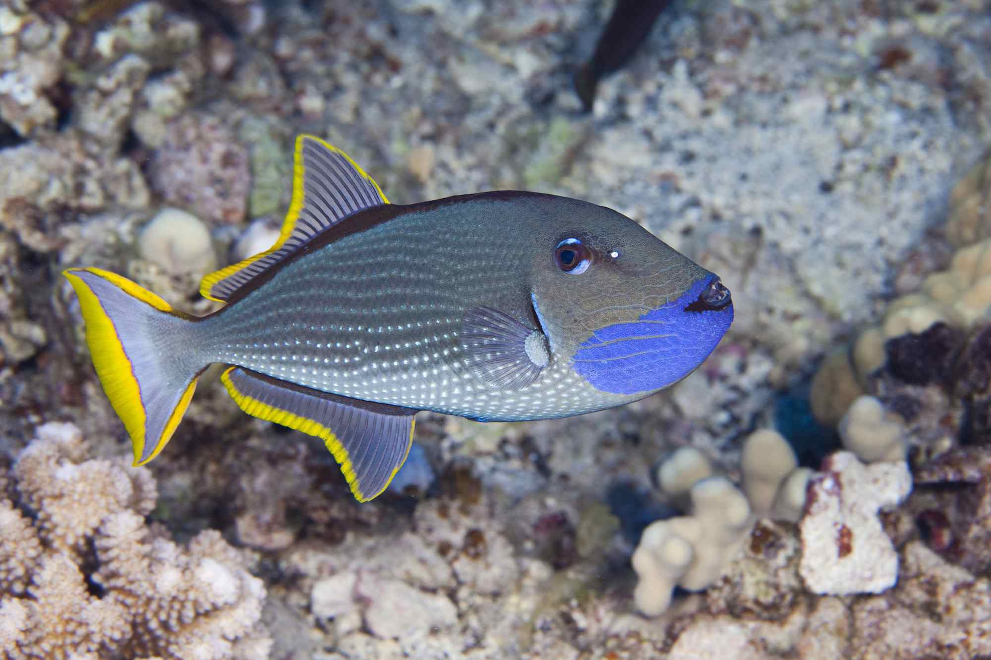 10 Ways to Save Money With Your Aquarium