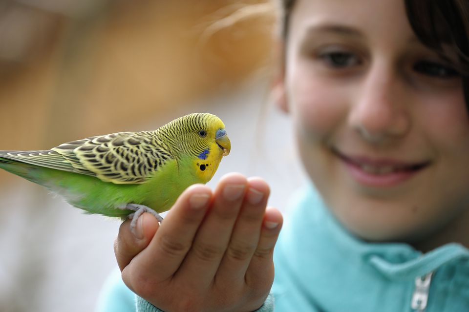 Cute Girl With A Budgie