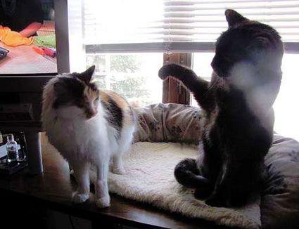 free kittens pittsburgh pa