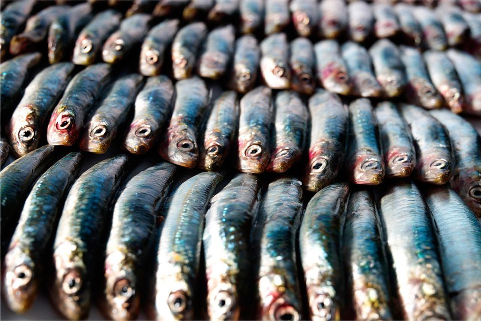 A close-up of a vast arrangment of anchovies