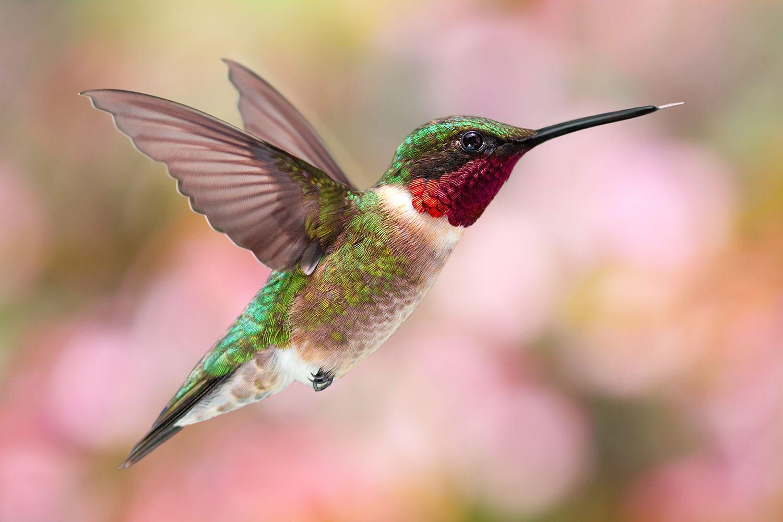 12 important animals of north america biocorpaavc Gallery