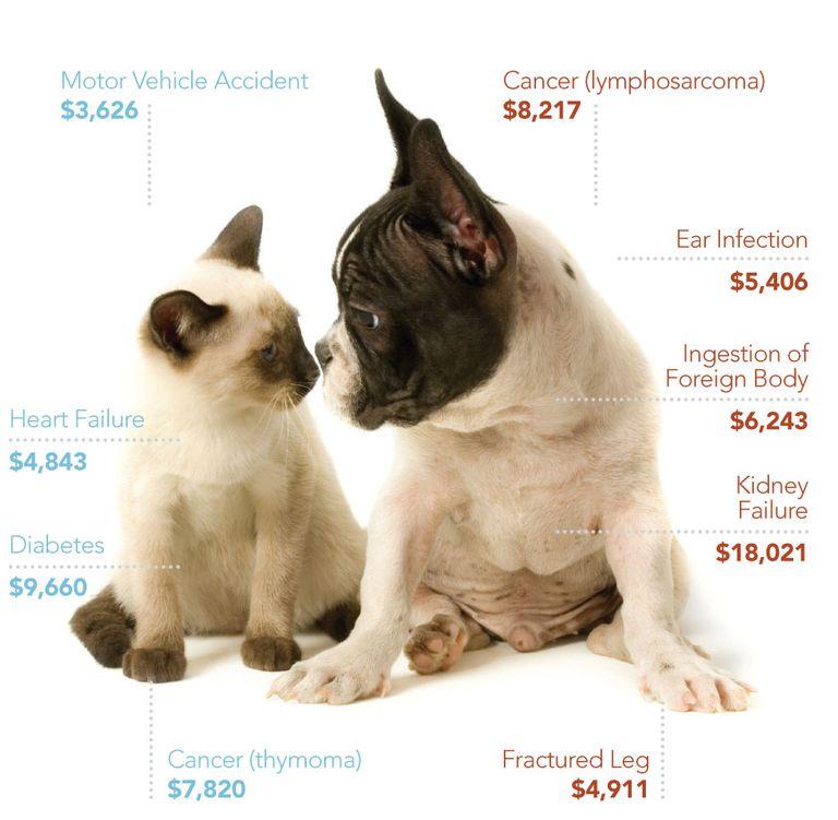 Con los costos médicos que conlleva una mascota, tal vez busques un seguro para él.