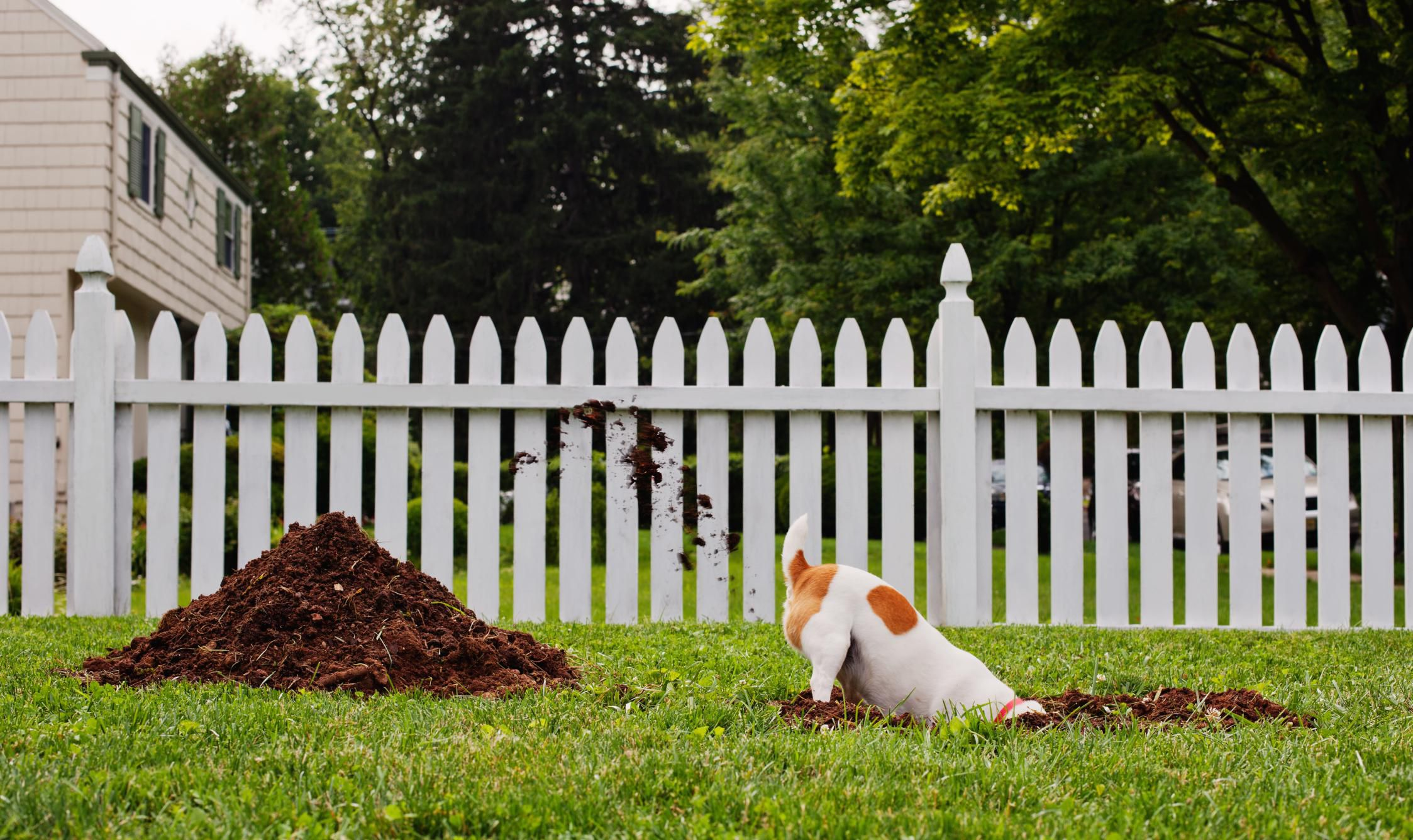 common dog behavior problems and solutions