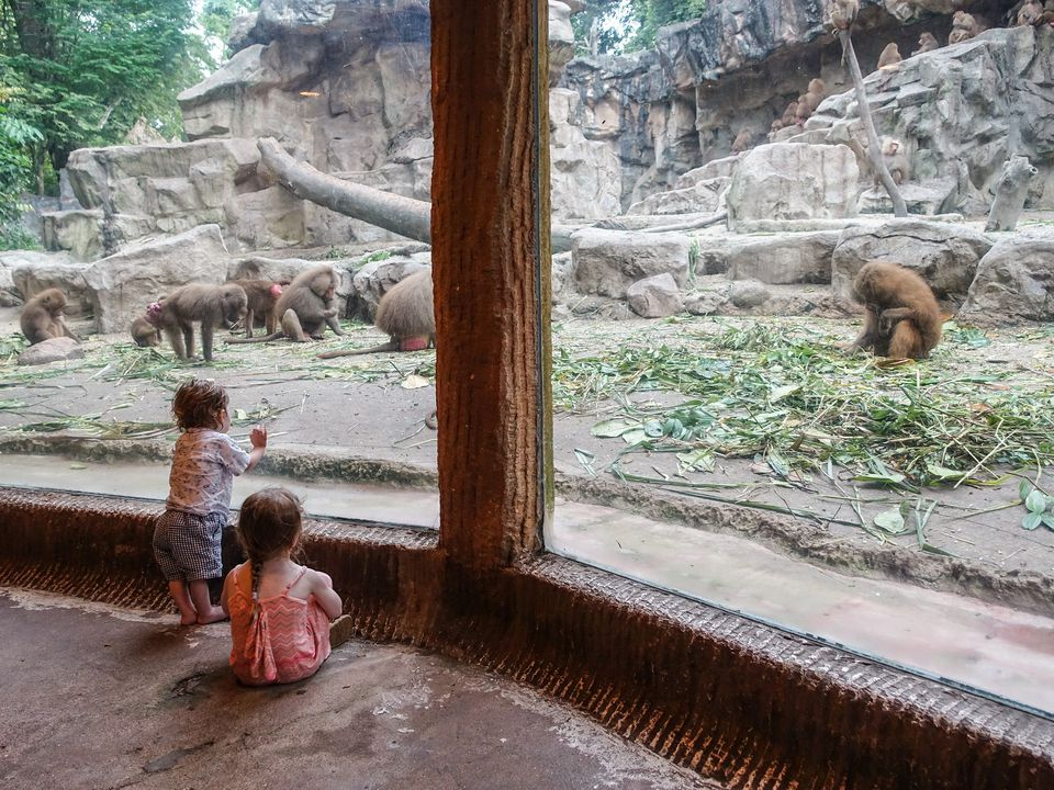 Kids observing baboons at Singapore Zoo