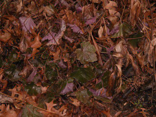 Evergreen Perennial Plants
