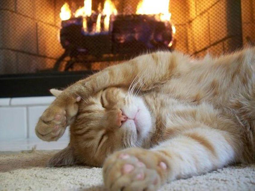Cat Drinking Coffee To Keep Warm