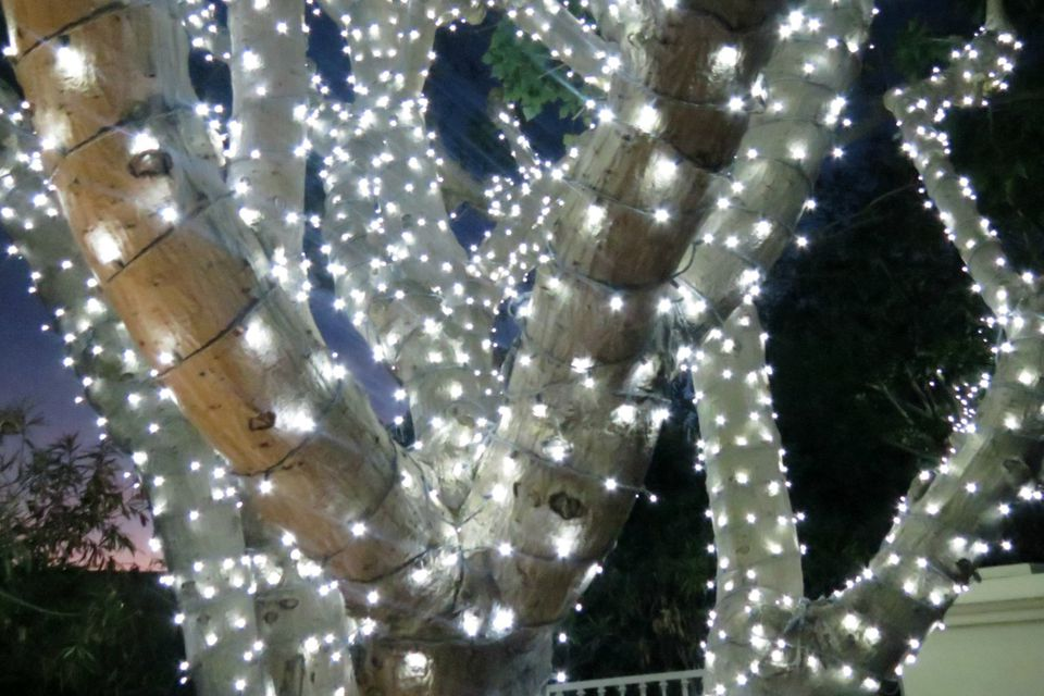 How to wrap trees with outdoor lights trees with lights workwithnaturefo