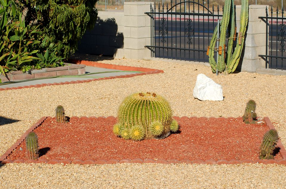 Cactus: sustainable front yard landscaping. This land was near the Mojave desert.