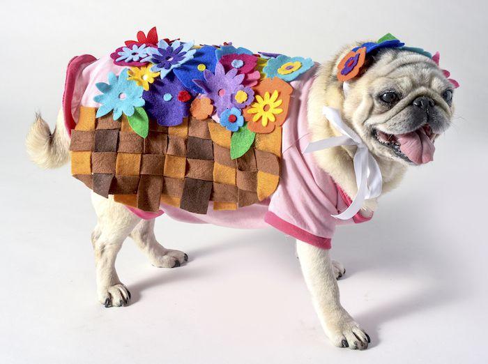 DIY Flower Basket Costume For Dogs