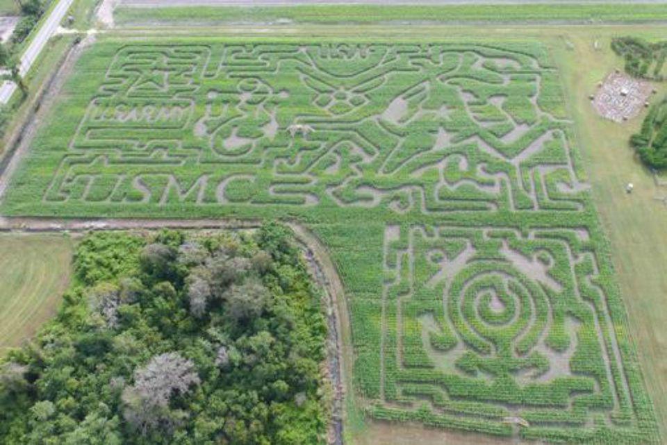 Corn Maze in Fla.