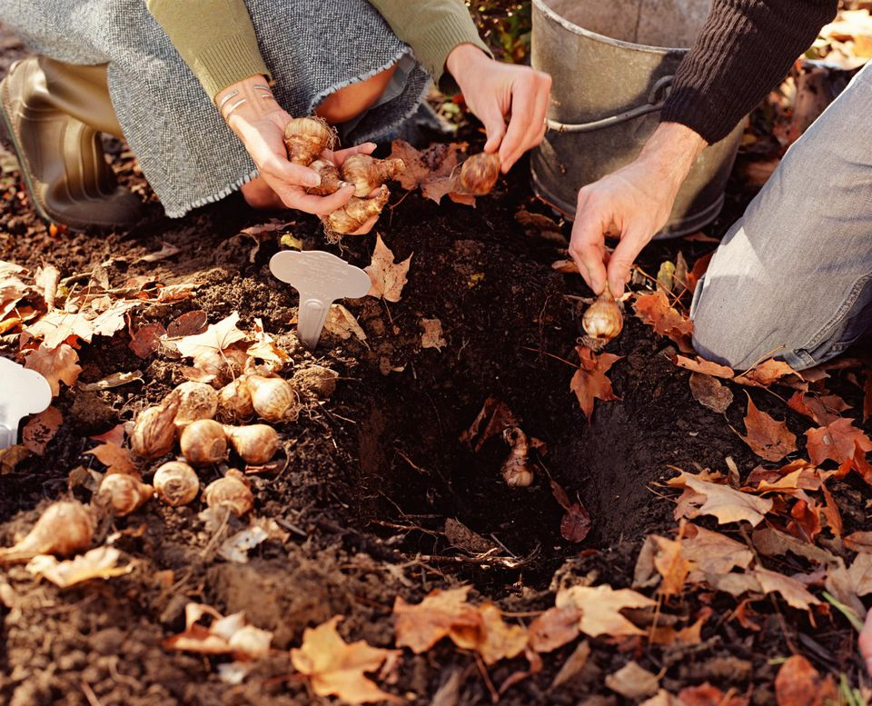Couple planting bulbs in ground