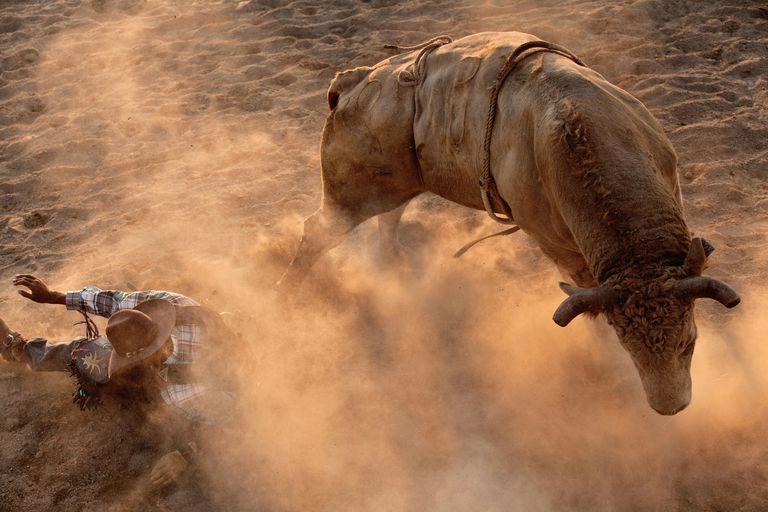 Bull rider on the ground