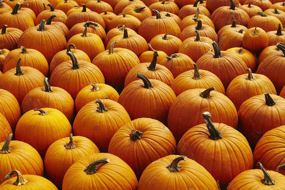 USA, New York, Pumpkins, full frame