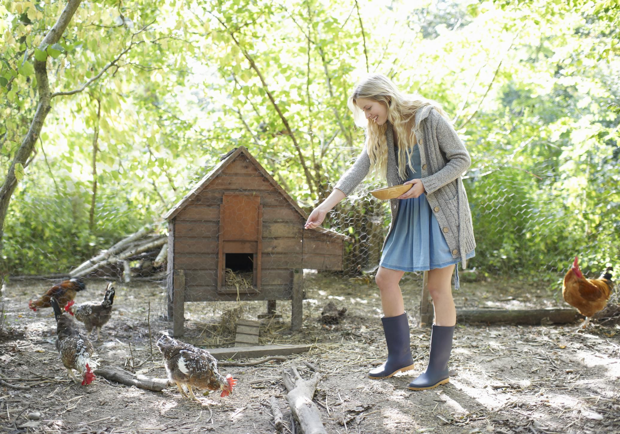 An Overview Of How To Build A Portable Chicken Coop