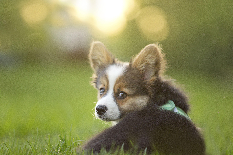 Seizures In Puppies Understanding Epilepsy In Dogs