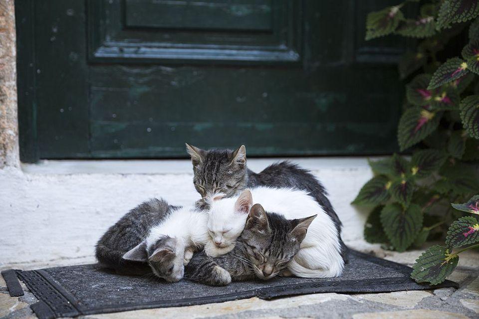 Cats at Paleokastritsa in Corfu, Greece
