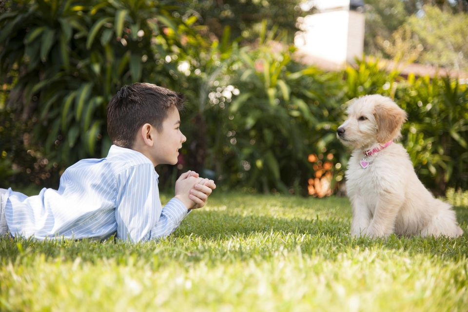 Boy playing with his puppy in the grass