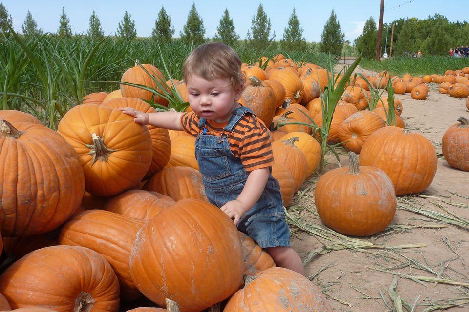 Picking a pumpkin at Schnepf Farms.