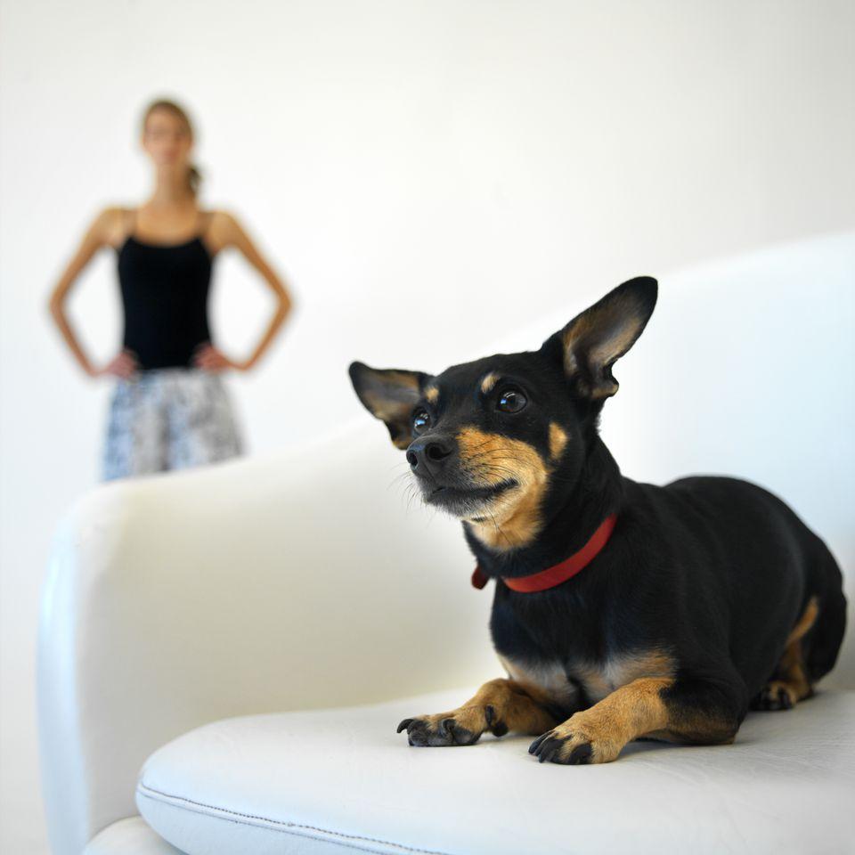 dog-owner-background-GeorgeDoyle-getty-stk203450rke.jpg