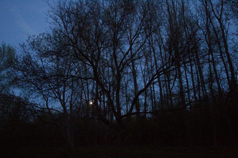 DarknessTrees_1500.jpg