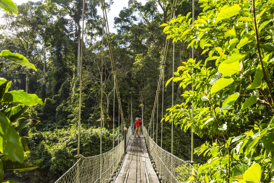 Malaysia, Borneo, Sabah, Footbridge in rainforest