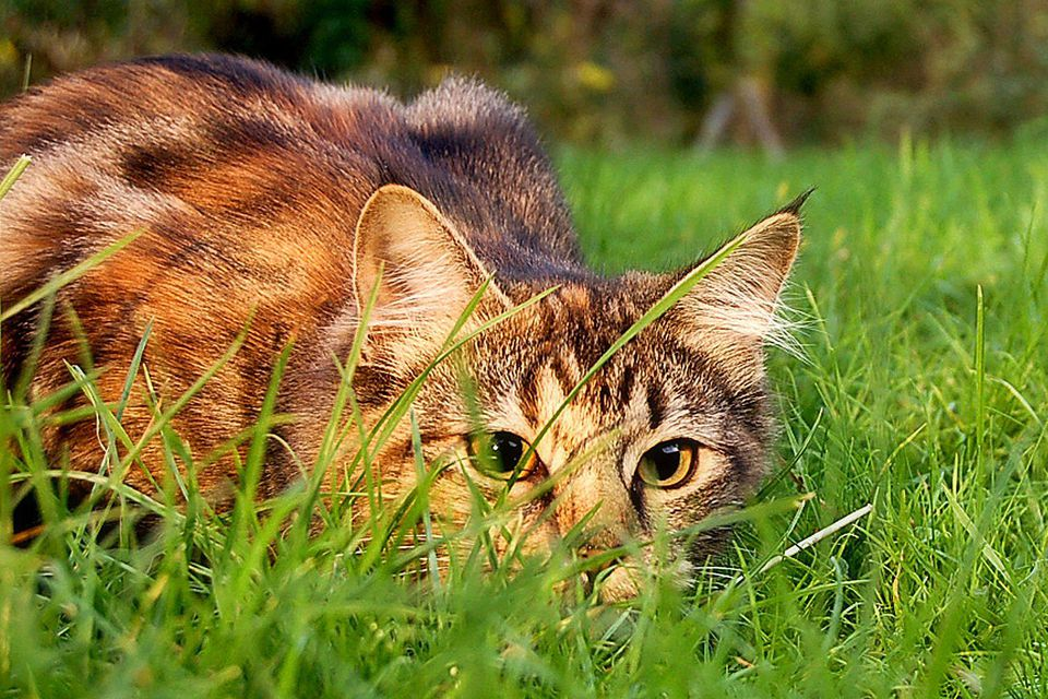 Ways To Keep Cats Out Of Your Yard