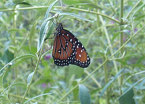 Butterfly at Rio Grande Botanic Gardens