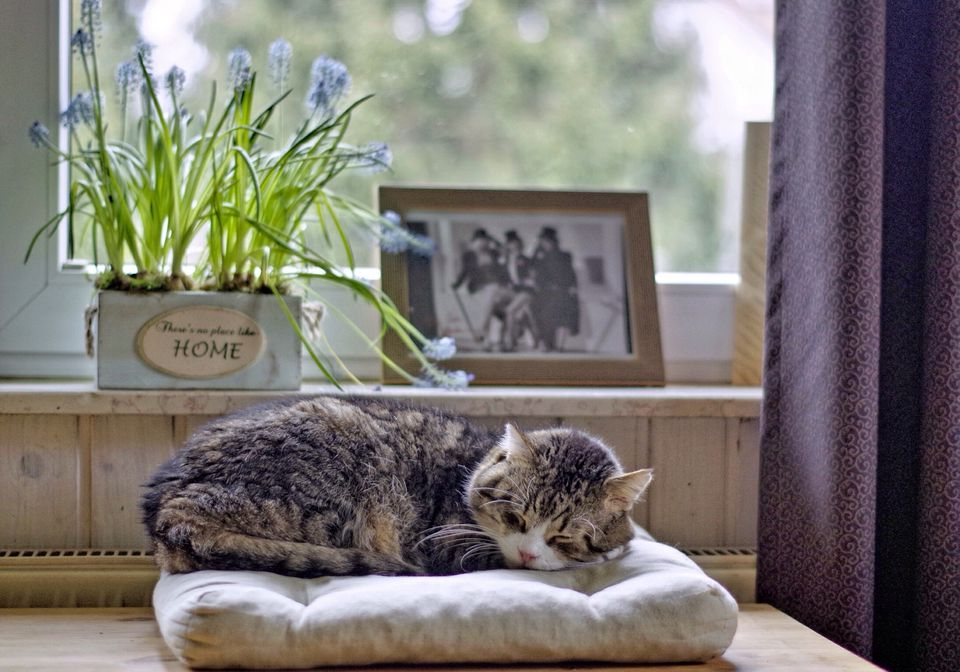 Cat Sleeping On Bed Against Window At Home