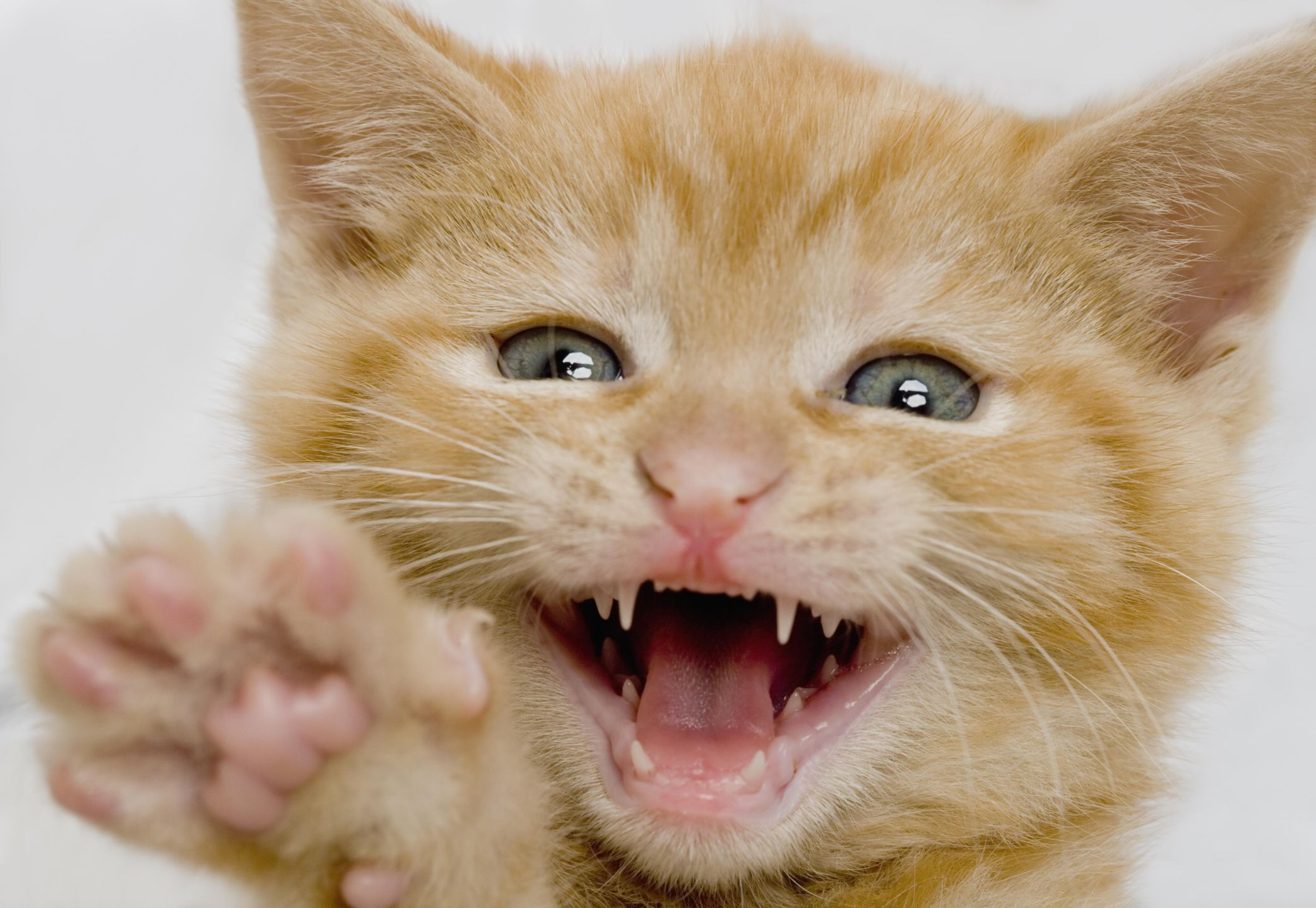 When Do Puppies And Kittens Lose Their Baby Teeth?
