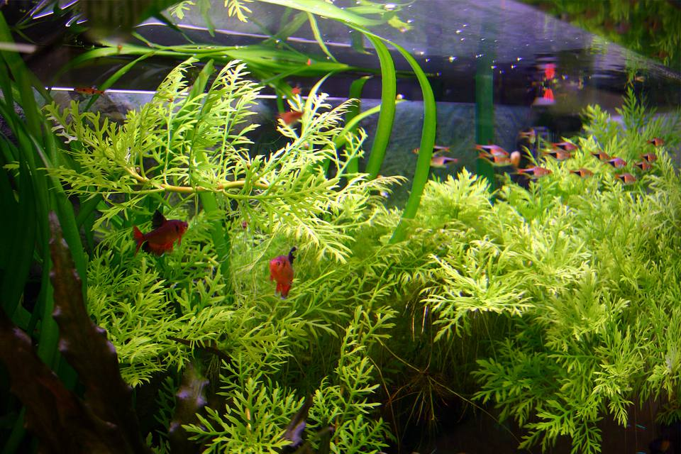 aquarium plants that change