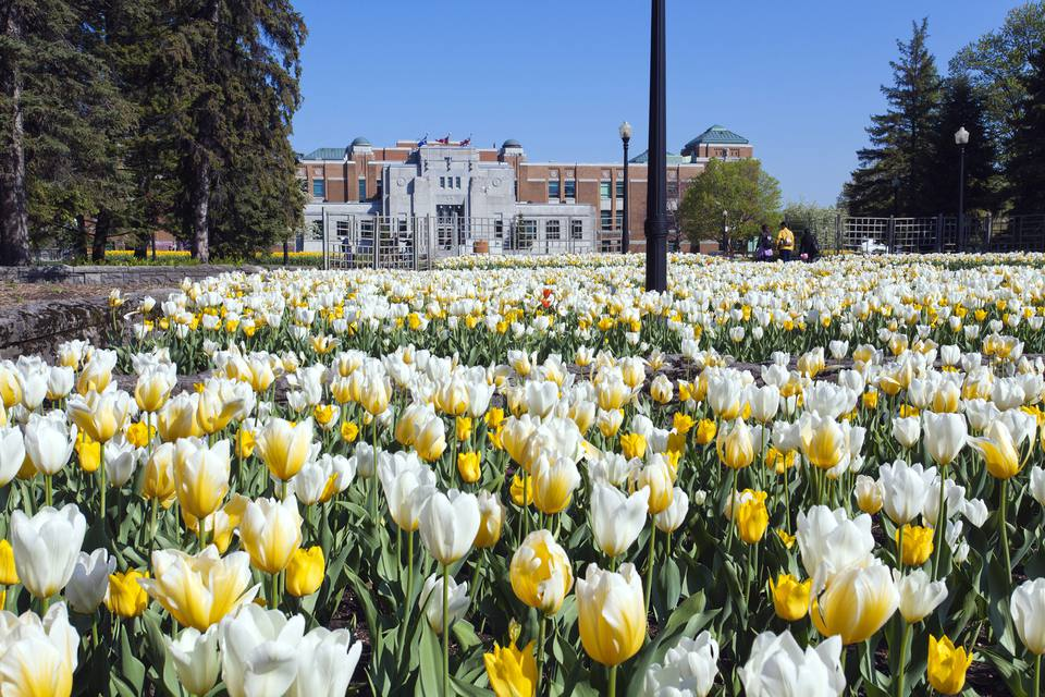 Canada, Quebec province, Montreal, botanical garden in spring, tulips