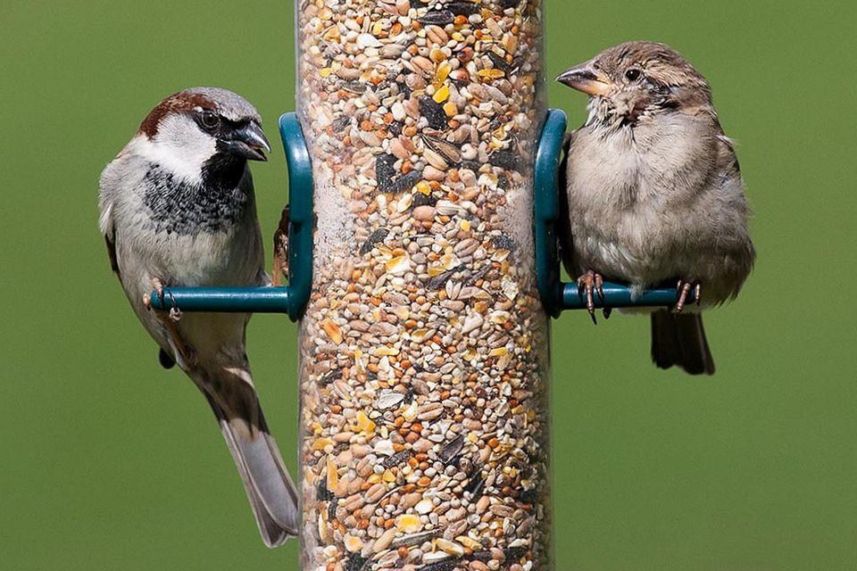 Most Common Backyard Birds